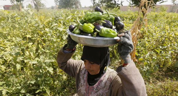 Syria and Regional Food Security