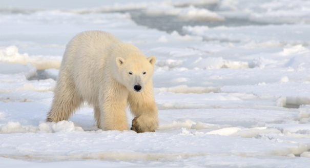 Judy Asks: Should the EU Worry About the Arctic?